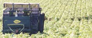 POWELL 3-WHEEL TOBACCO HARVESTER with LIVE BOTTOM CONTAINER HARVESTS YOUR CROP FASTER and MORE  ECONOMICALLY, THUS PUTTING MORE MONEY IN YOUR POCKET!!!